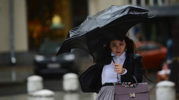 МЧС объявило экстренное предупреждение на 12 сентября из‑за сильного ветра в Подмосковье