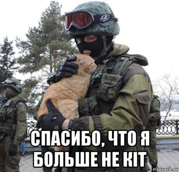 Три кита или три кiта? А может, три кота: Аксёнов прокомментировал заявление украинского МИДа о стратегии  возвращения Крыма