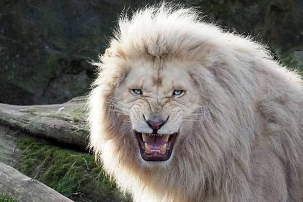 Животные с невероятной красотой!