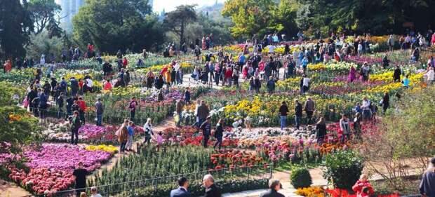 В Никитском ботаническом саду открылся Бал хризантем