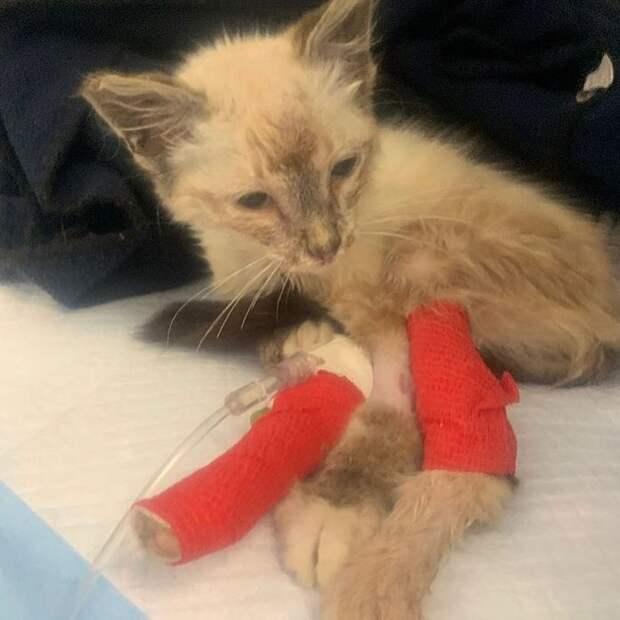 Девушка спасла котенка и помогла ему измениться до неузнаваемости
