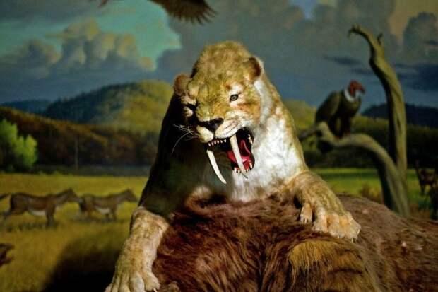 В Северной Америке обнаружены остатки гигантской саблезубой кошки