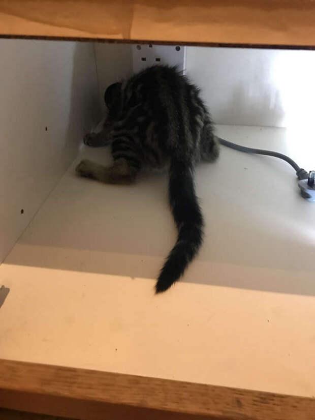 котенок застрял в шкафу
