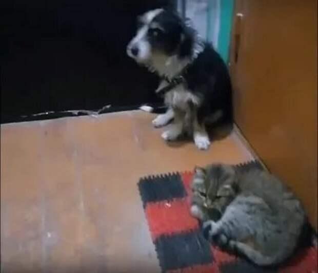 Кот и пес обрели новый дом в Дзержинске спустя два года после смерти хозяев