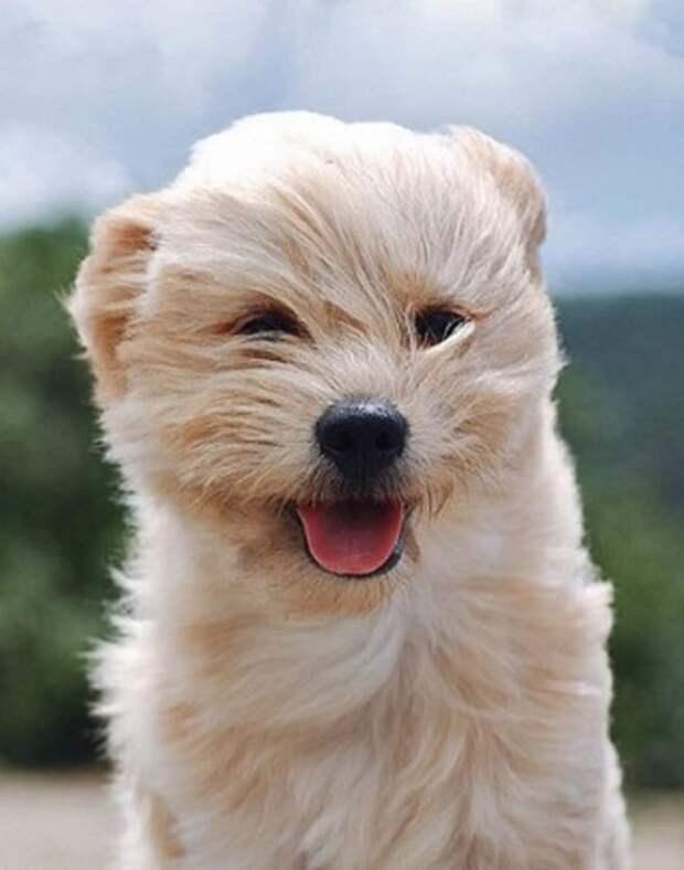 Спасенный пес обожает гулять в ветреный день и показывает хозяйке язык во время фотосессии