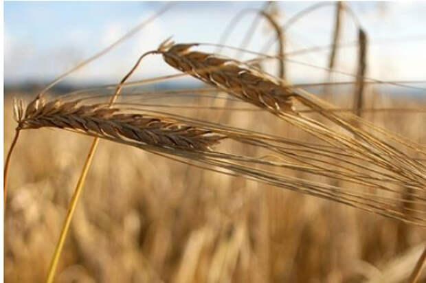 Украина собрала рекордный урожай зерна за всю историю