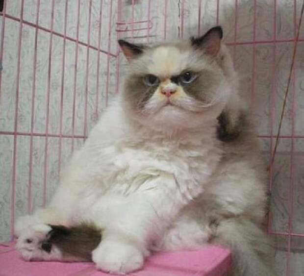 «Вставай, соня!»: новая Grumpy Cat, ставшая звездой Интернета, не дает хозяйке спать по утрам