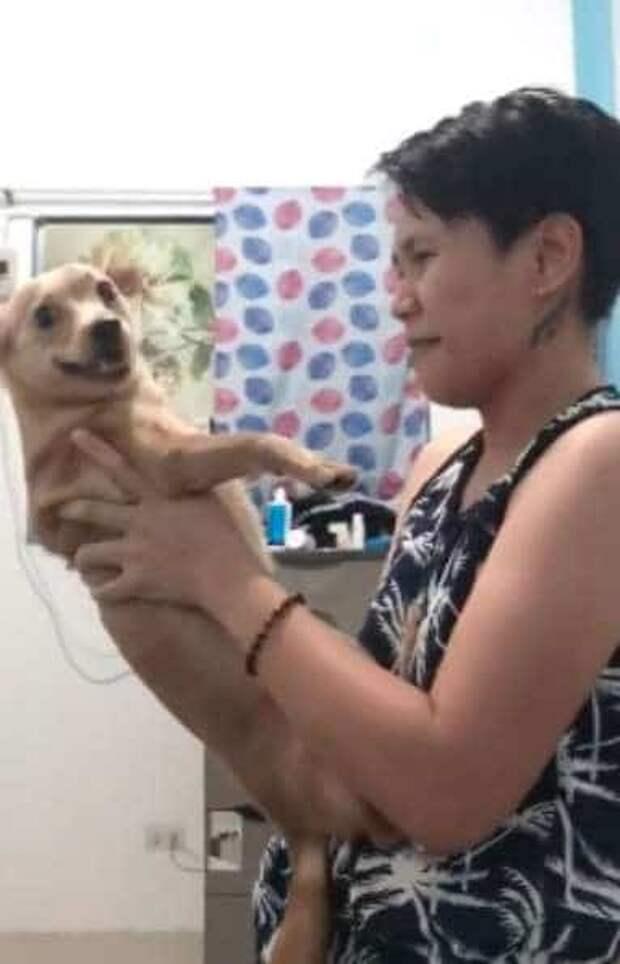 Хозяйка «игнорировала» пса, делая вид, что не видит его, а тот не понимал, в чём дело
