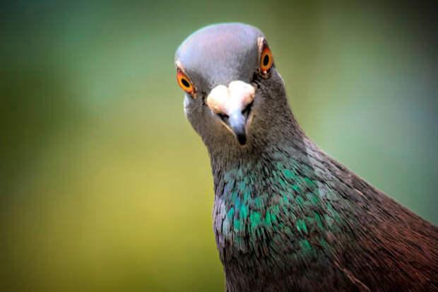 В Лианозове массово отравили голубей