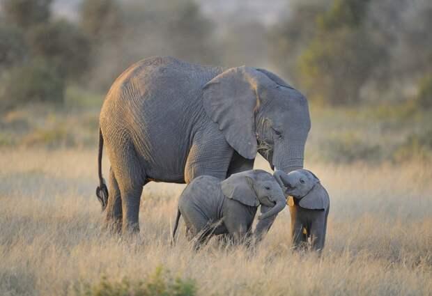 Слонята - 29 очаровательных фотографий