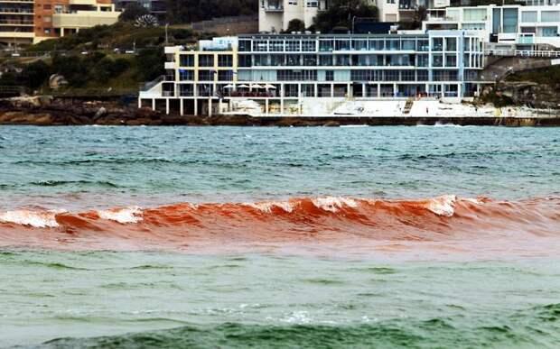 krovavoaliokean 10 Вода на пляжах Австралии окрасилась кроваво красным, напугав отдыхающих