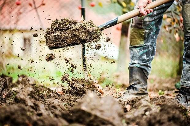 Подкормить и перекопать. Что делать с грядками, с которых убрали урожай?