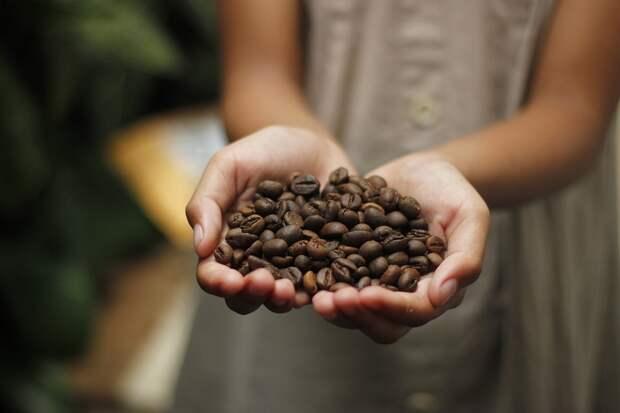 Крым станет кофейным придатком Никарагуа