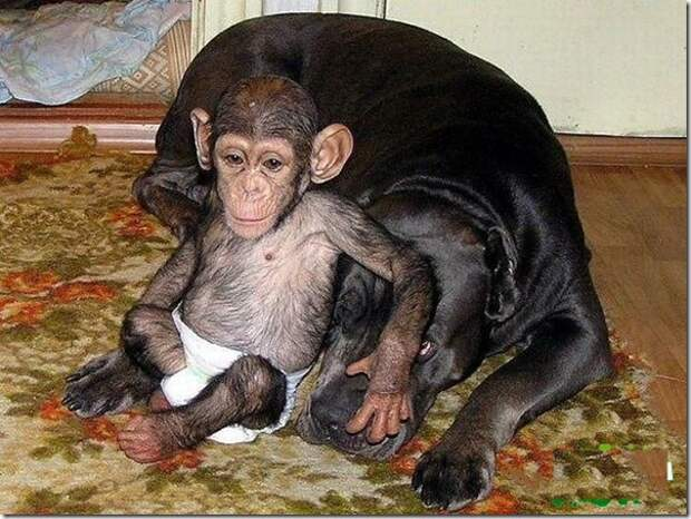 in-marmoset-a-new-mom_11_(www.funnypagenet.com)
