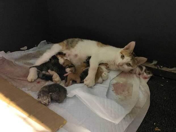 В шанхайском офисе приютили беременную кошку и получили восемь котят в подарок!