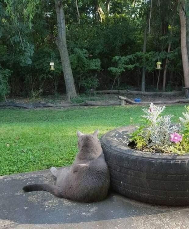 Стефани в течение года завоёвывала доверие кота-бродяги, и он превратился в большого домашнего пушистика!