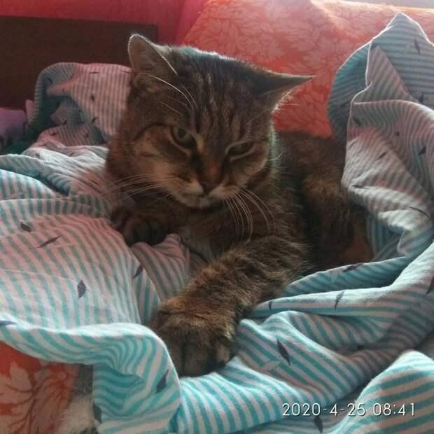 Как Никанора прожила 9 кошачьих жизней засвои 25 лет