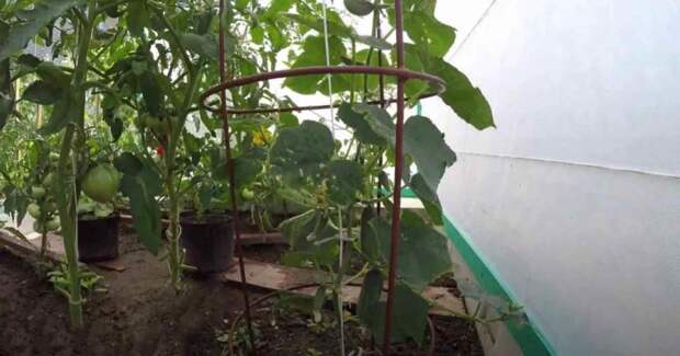 Как сделать шпалеры для вьющихся растений