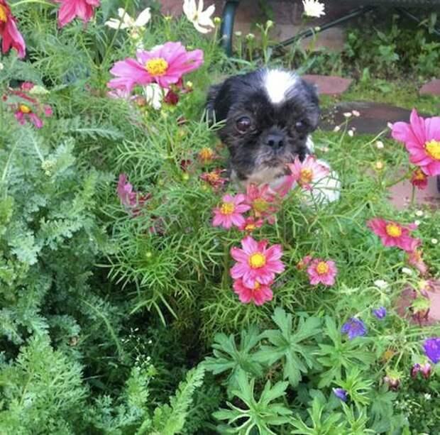Всю жизнь глаза бедной Пикси были закрыты шерстью, но после стрижки собака увидела, как прекрасен мир!