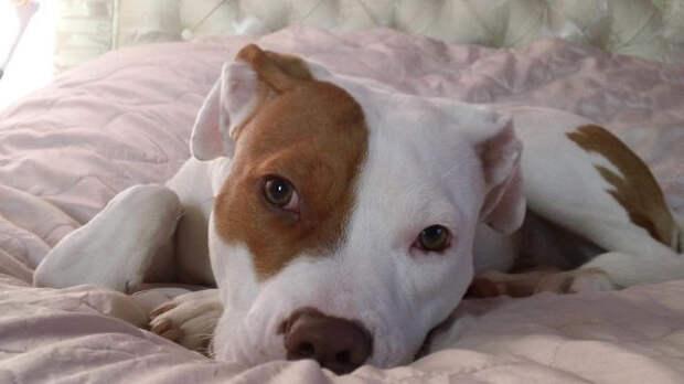 Ivor-the-deaf-dog-1248200