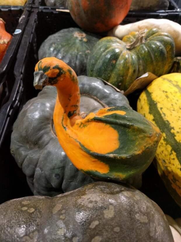 21 фрукт и овощ, которые выглядят очень необычно