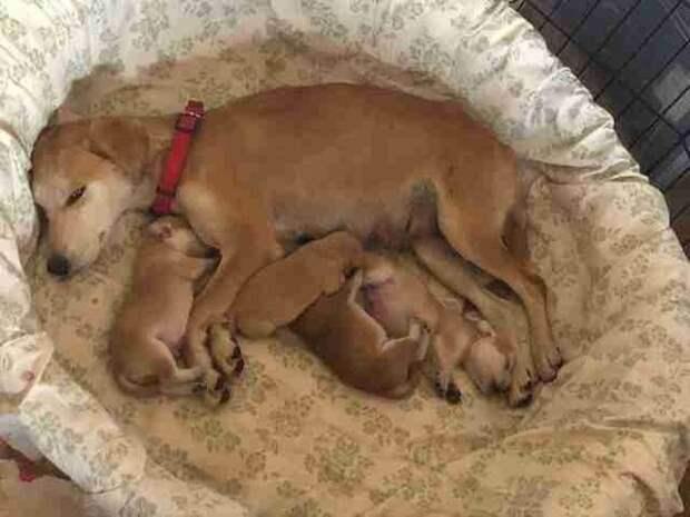 Бродячая собака ведёт спасателей к своим надёжно спрятанным щенкам