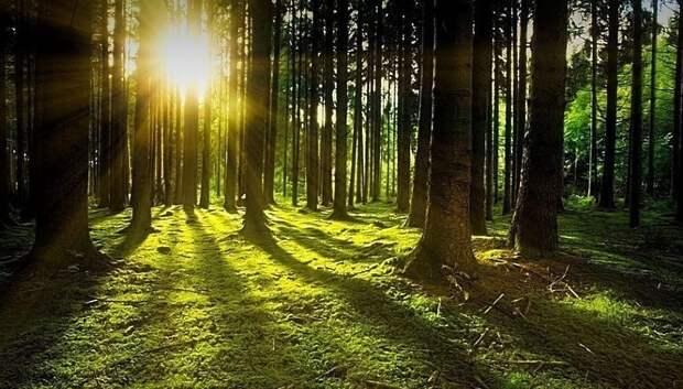 Жители Подольска могут выбрать форму благоустройства лесопарка «Елочки»