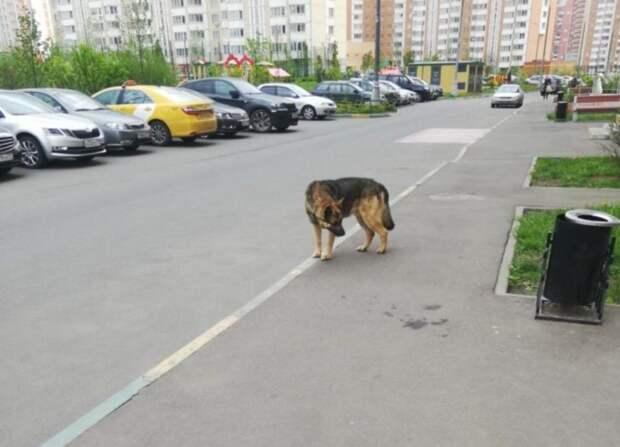 Одинокая собака в ошейнике замечена на Рождественской