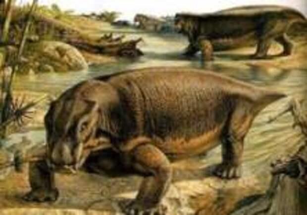 Останки огромного дицинодонта нашли в Польше