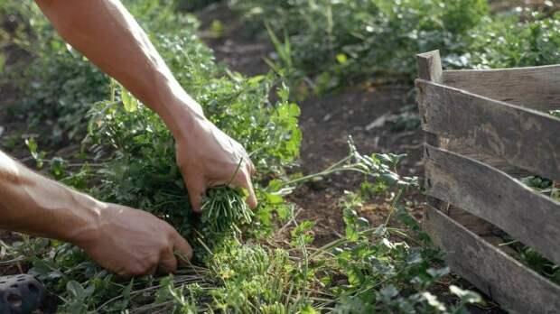 Лунный календарь огородника на 2021 год сбор урожая зелени