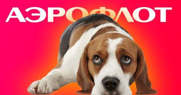«Аэрофлот» бросил в Китае кошек и собак россиян
