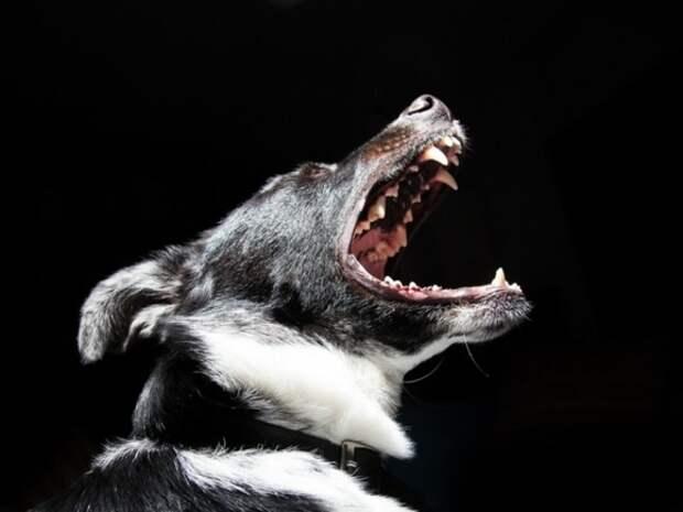 У ЖК «Саларьево» бойцовская собака напала на женщину с ребенком