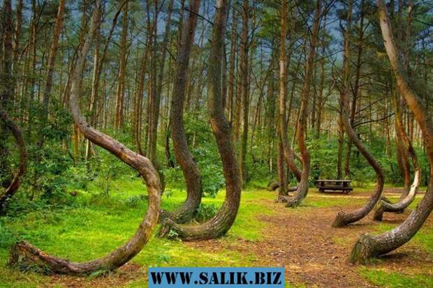 Лес Хоя-Бачу – самый паранормальный лес в мире