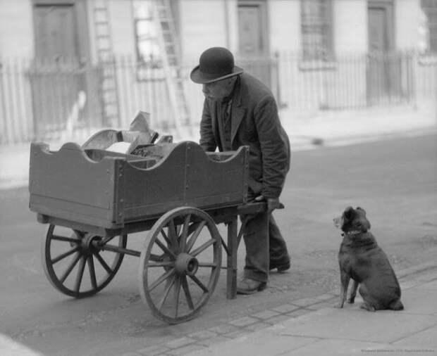 Лоточник с мясом для кошек: феномен викторианского Лондона
