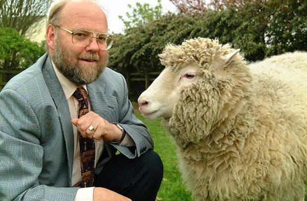 Британский профессор и эмбриолог сэр Иэн Уилмут из Эдинбурга прославился в 1997 году, когда он представил первого млекопитающего, которое было клонировано из взрослой клетки. Этим млекопитающим стала овца Долли