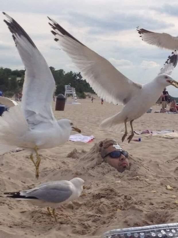 Тот неловкий момент, когда не хочешь, а покормишь птичек 33 несчастья, забавно, не повезло, не с той ноги, невезучие, неудачи, неудачный день, смешно