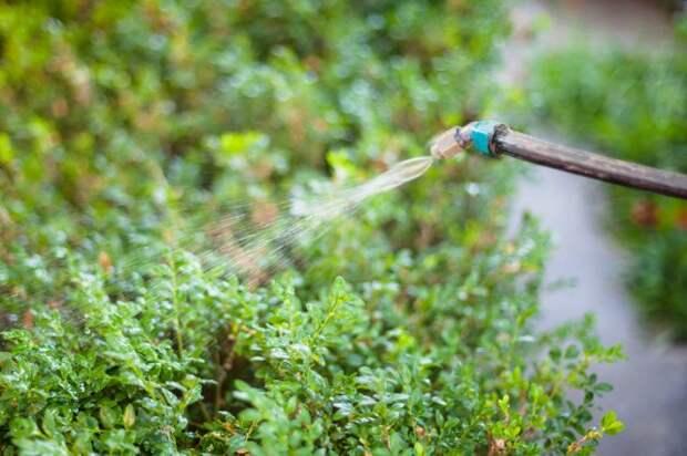 Обработка растений в саду