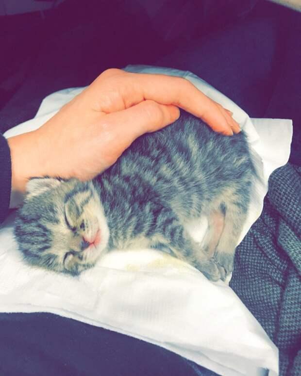 На металлургическом заводе в упаковке случайно нашли крошечного котенка