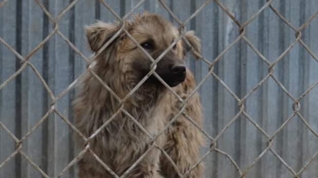 Бродячие собаки разодрали девочке лицо в Кузбассе