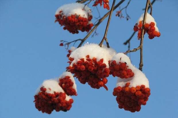 Какие опасности несет теплая весна?