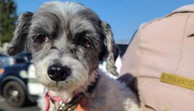 Локальные новости: В Калифорнии щенок лаял изо всех сил, пока его не спасли из раскаленной машины