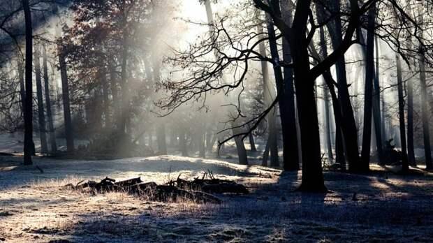 Человеческие сердце и печень обнаружили в лесополосе на севере Москвы