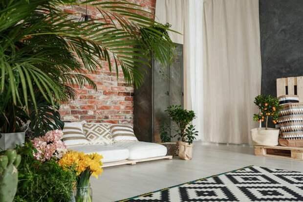 Комнатные растения в интерьере гостиной. / Фото: 7dach.ru.