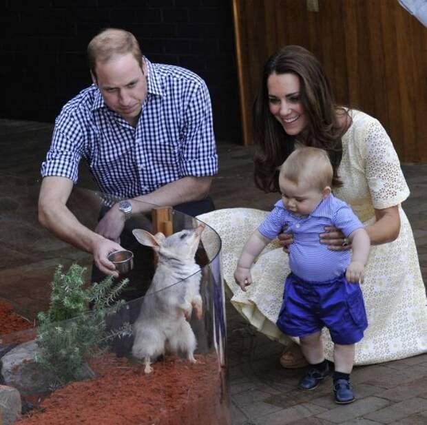 В зоопарке Таронга родились первые детеныши билби