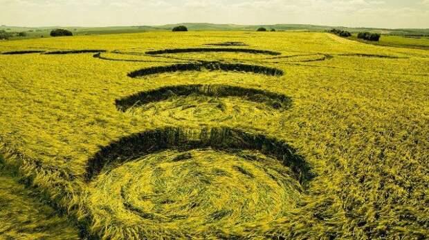 Ученые изучили круги на полях в попытке определить их источник