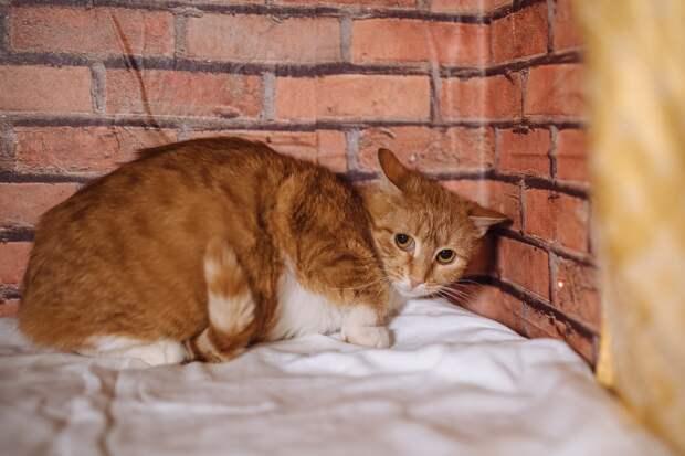 Как домашние кошки становятся уличными???