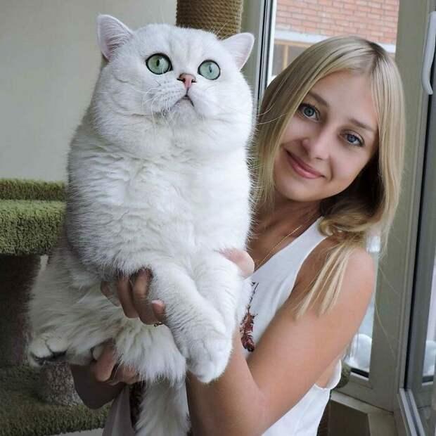 8 фото огромных котиков, которые не осознают, насколько они большие