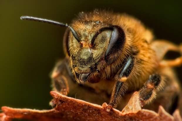 insects53 Портреты насекомых