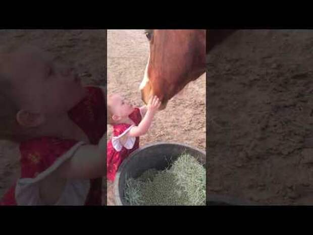 Двухлетняя девочка желает спокойной ночи лошадкам