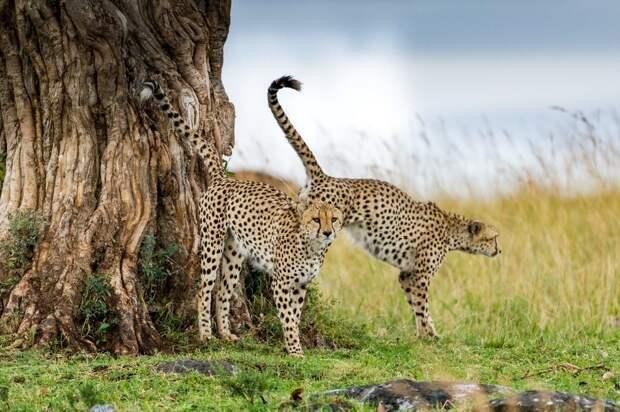 Фотографии животных, которые были сделаны на прошлой неделе